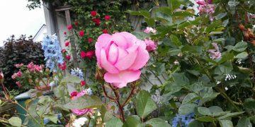 Blüten-Farben-Pracht